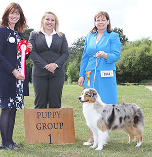 Paignton 2016 Pastoral Puppy Group Winnner