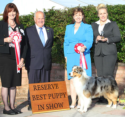 Paignton 2016 Reserve Best Puppy In Show