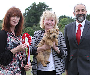 Paignton 2016 Terrier Puppy Group Winnner