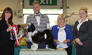 Paignton 2016 Utility Puppy Group Winnner
