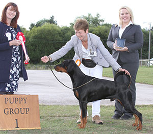 Paignton 2016 Working Puppy Group Winnner